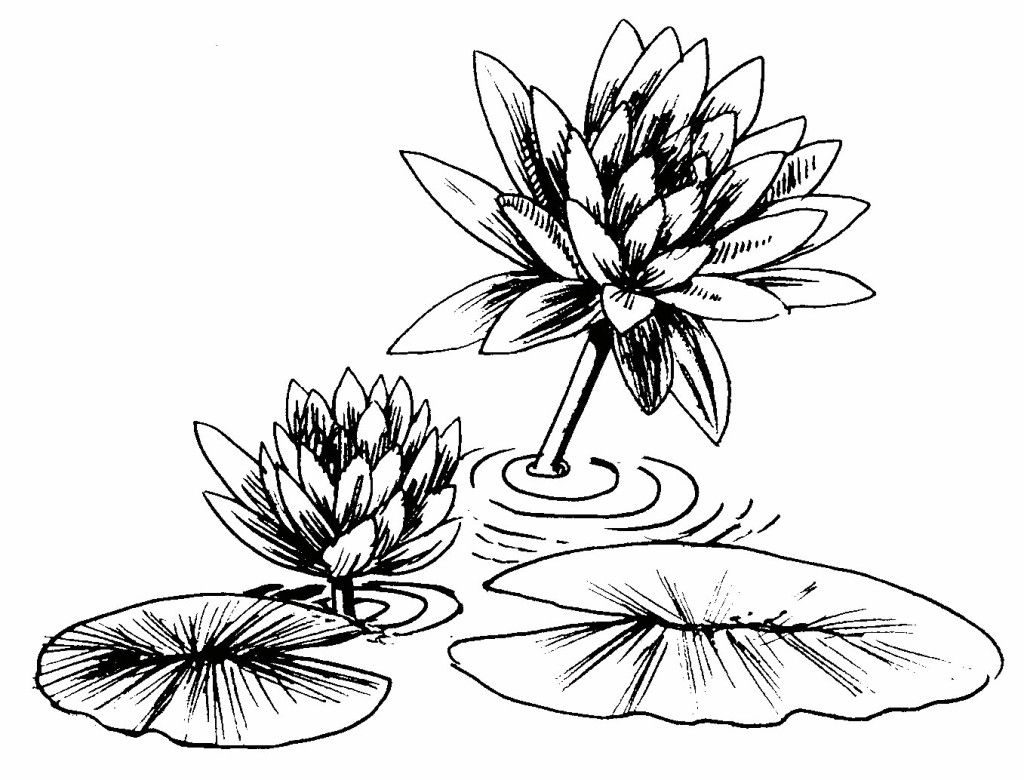 Lily Pad Coloring Page Simple With Photos Of Lily Pad 66 9984