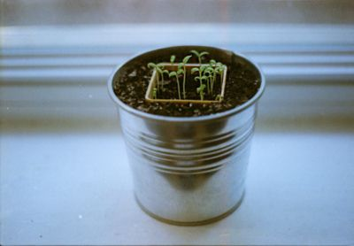 rawritsyoko:    I have a pot of plant like this on my desk.  lololol.