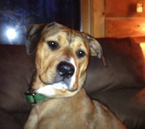 Reunited 6 24 14 Lost Dog Female Brown With White Markings Newington Ct Culver St At Webster St Our Dog Hopp Rottweiler Mix Losing A Dog Sweet Dogs