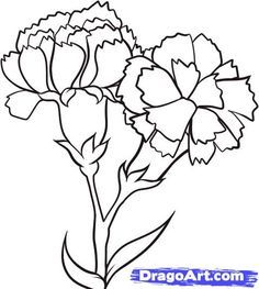 How To Draw Carnations Step 6 Flower Drawing Tutorials Flower Drawing Carnation Drawing