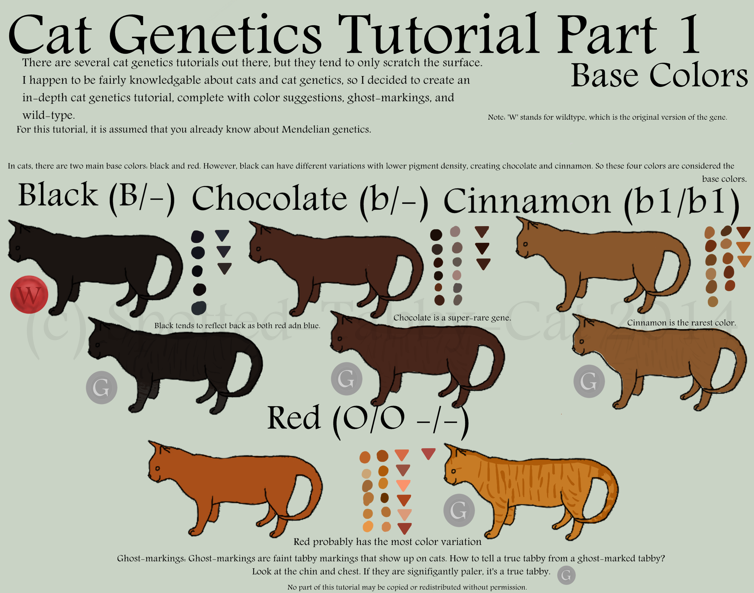 Cat Tutorial Part 1 (Base Colors) by Spotted