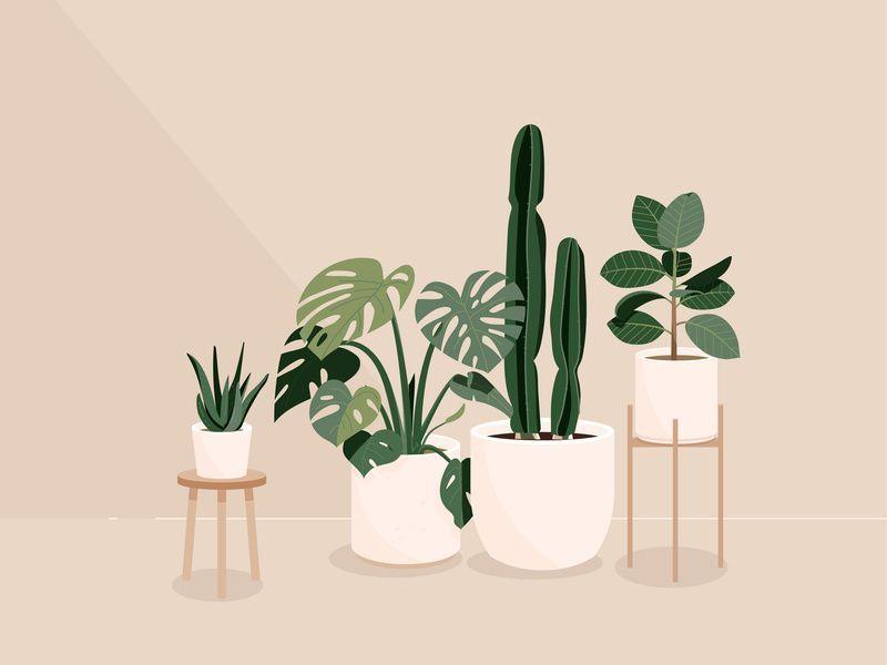 Plants by marcella susanto   aloe cactus illustration monstera plant plants vector