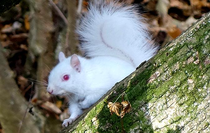 Rare albino squirrel in 2020 Albino, Marshal animal