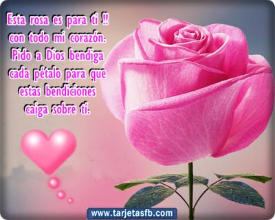 Imagenes Hermosas De Rosas Frases Rosas Bonitas Rosas Con