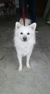 Adopt Charlie Of Cincinnati Ohio On I Want A Dog American