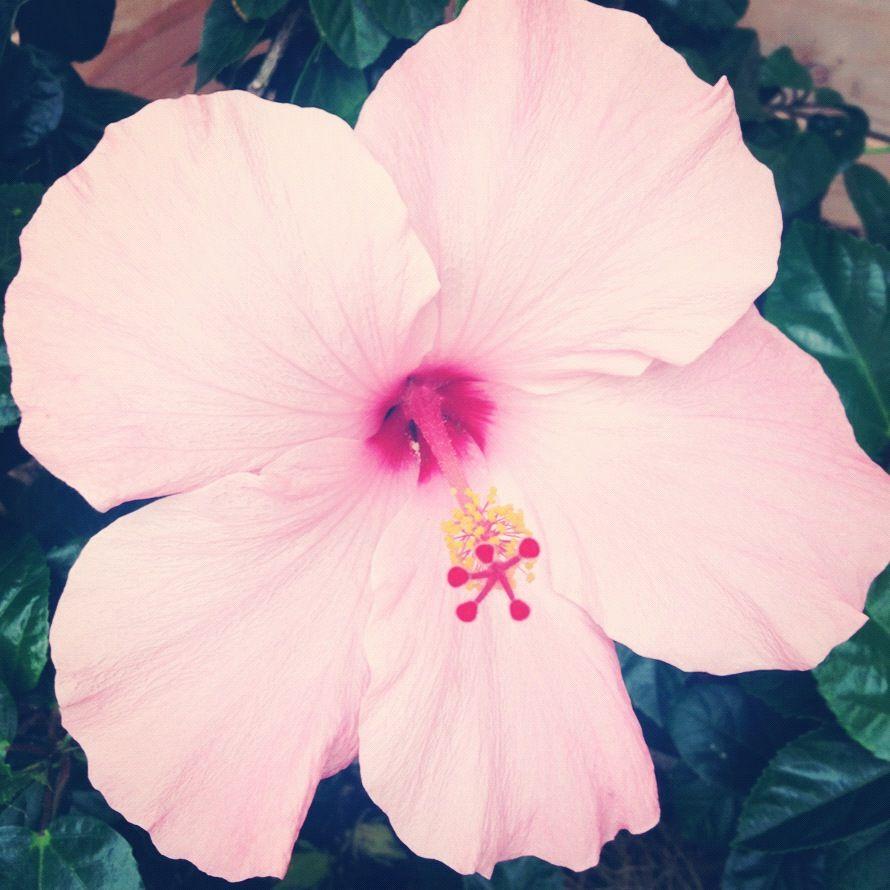 Pin By Katelyn Worum On Florals Pinterest Hawaii Flowers