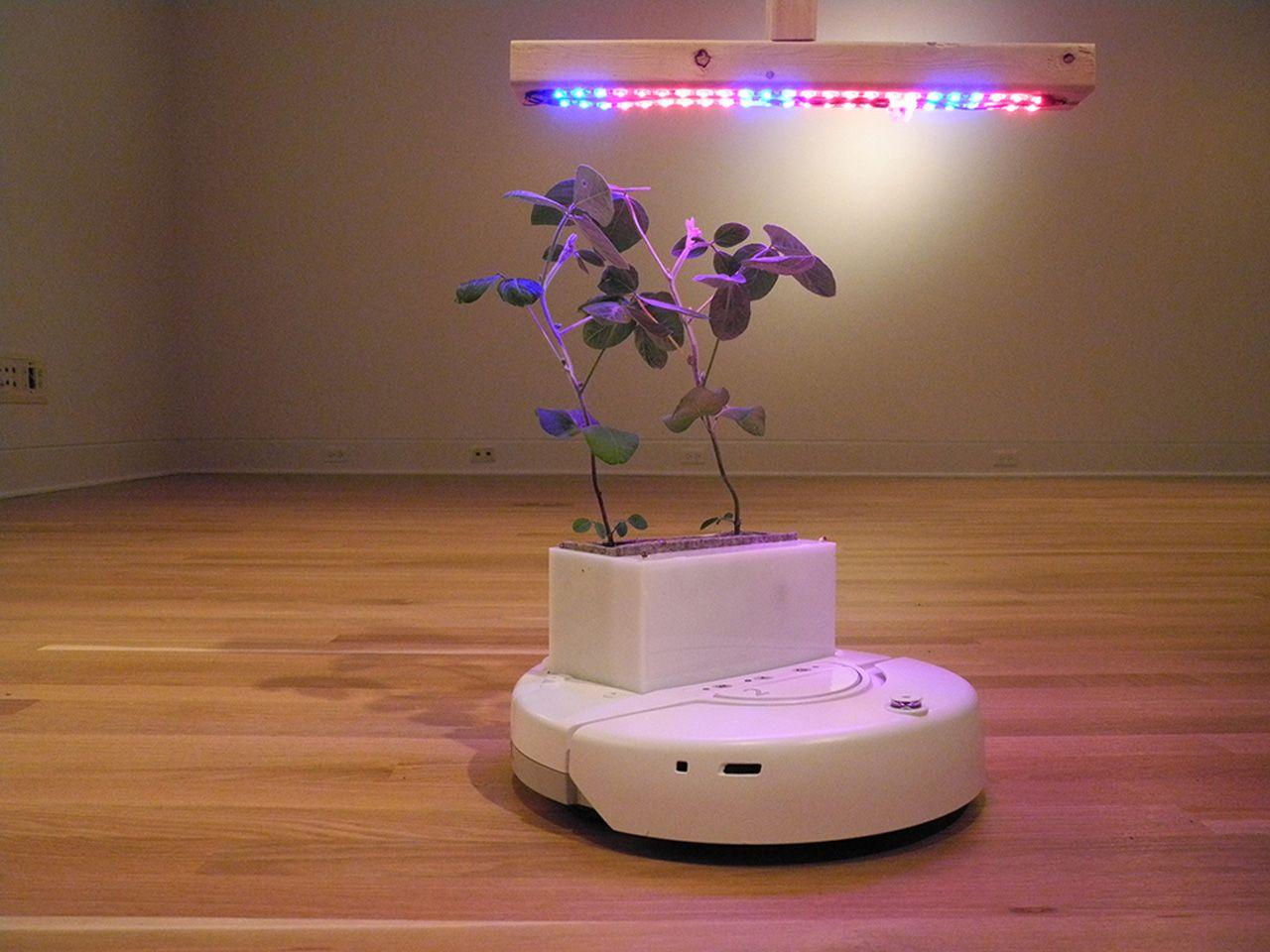 Pflanzen, die von Robotern in die optimale Lichquelle gesetzt werden, sind nur der Anfang eines starken Natur/Technik Systems.