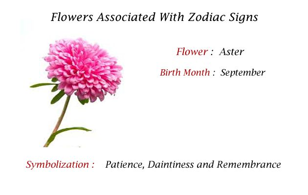 The Aster Is The Birth Flower For Those Born In The Month Of September Your Birth Month Flower Zodiac Sign Flowers Birth Month Flowers Month Flowers B