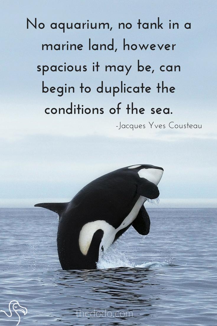 Orcas In Captivity The life of a captive ...