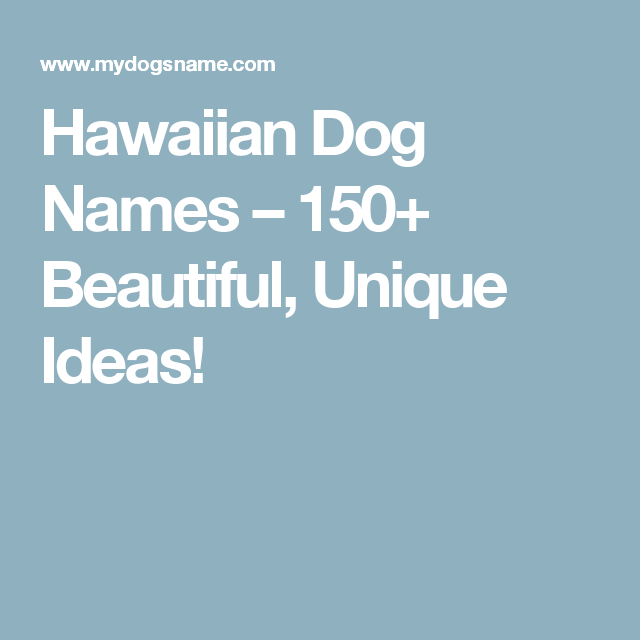 hawaiian dog names 150 beautiful unique ideas