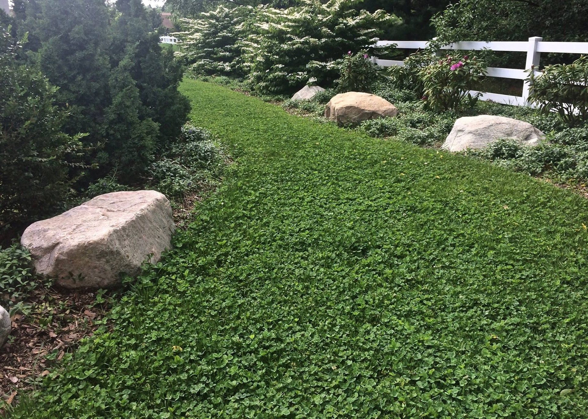 Pt 767 Dog Park Eco Lawn Mix With Microclover In 2020 Lawn Alternatives Fescue Lawn Seeding Lawn