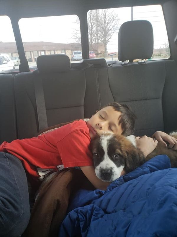 The Saint Bernard Puppies for Sale on Craigslist can live