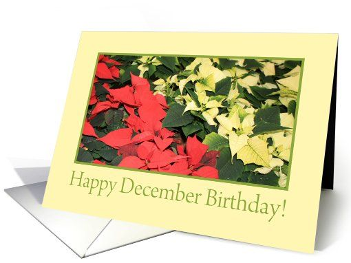 Poinsettia December Birthday Card My Greeting Card Universe