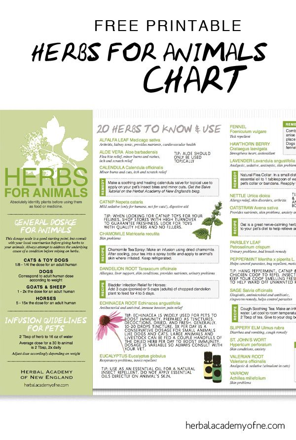 Natural remedies and tips for using Herbs for Animals