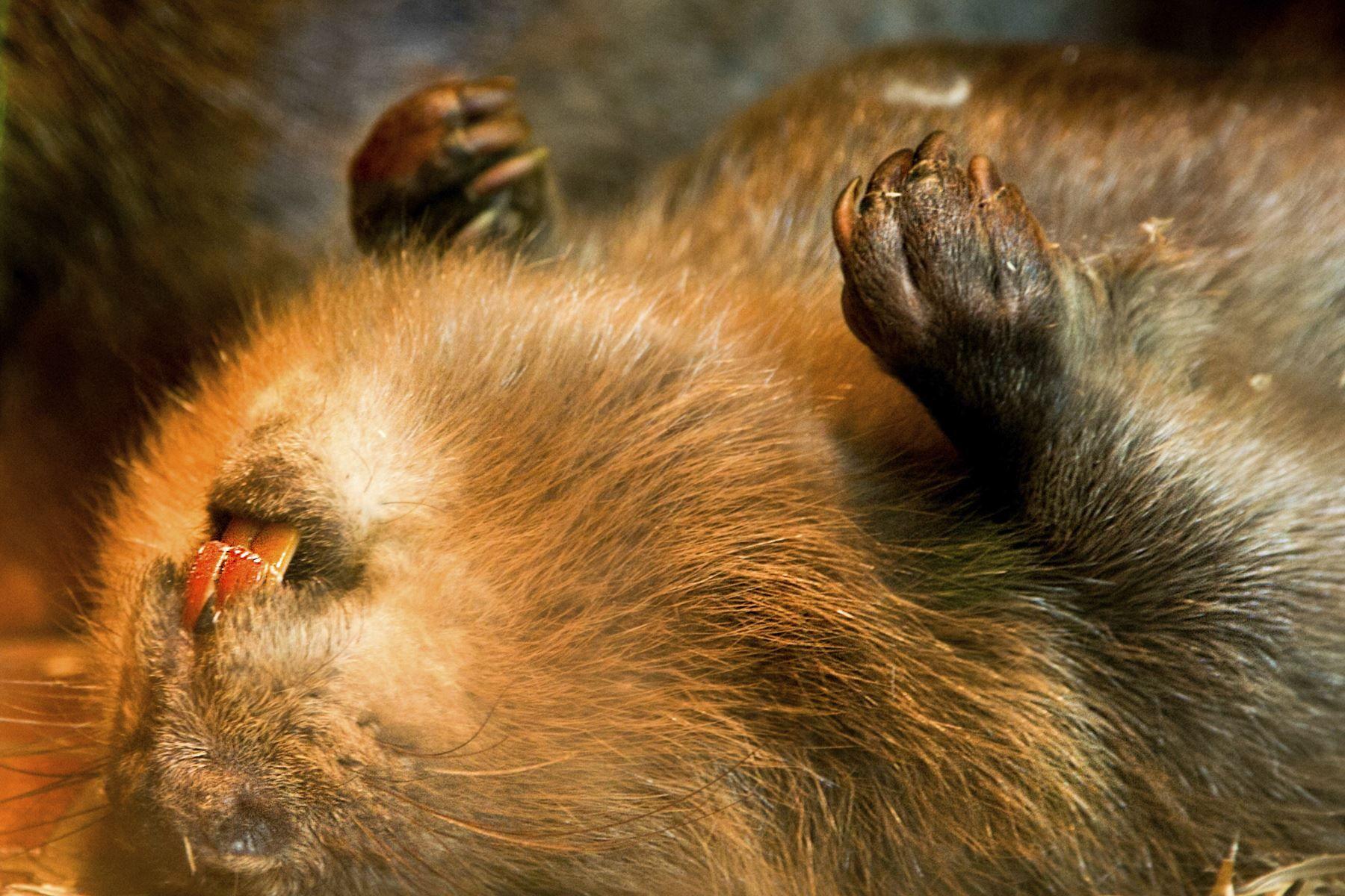 beaver tree service nj