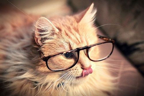 Intellectshual Kitteh Hipster Cat Cats Cute Cat Wallpaper