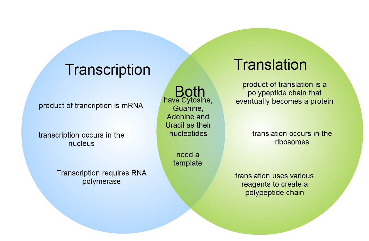 venn diagram dna and rna 2000 chevrolet silverado stereo wiring gliffy transcription translation