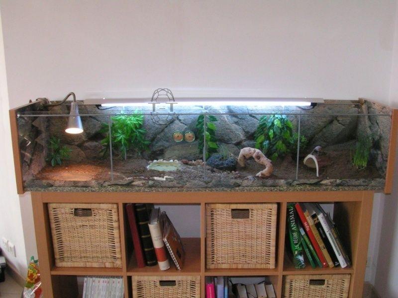 exemples de terrariums vitrine ik a pour corn lius et. Black Bedroom Furniture Sets. Home Design Ideas