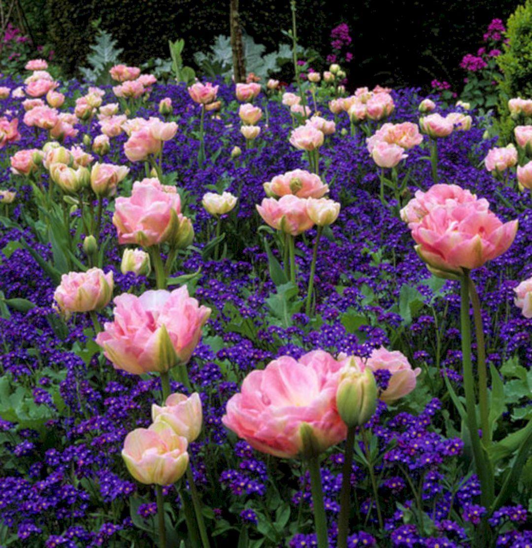 Cool 75+ Best Planting Combination Ideas For Beautiful Garden Https://freshouz.com/75-best-planting-c… | Beautiful Gardens, Plant Combinations, Flower Garden Design