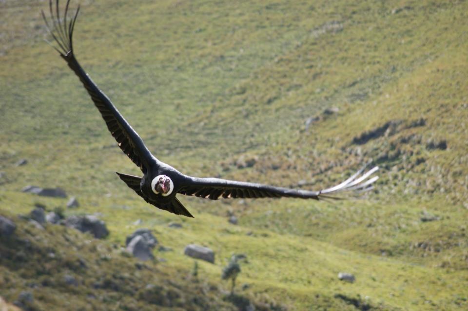 Invalid Url Animals Wild Animals Bald Eagle