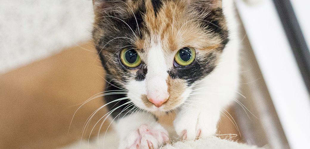 Destructive Scratching Cat behavior, Cats, Cats, kittens