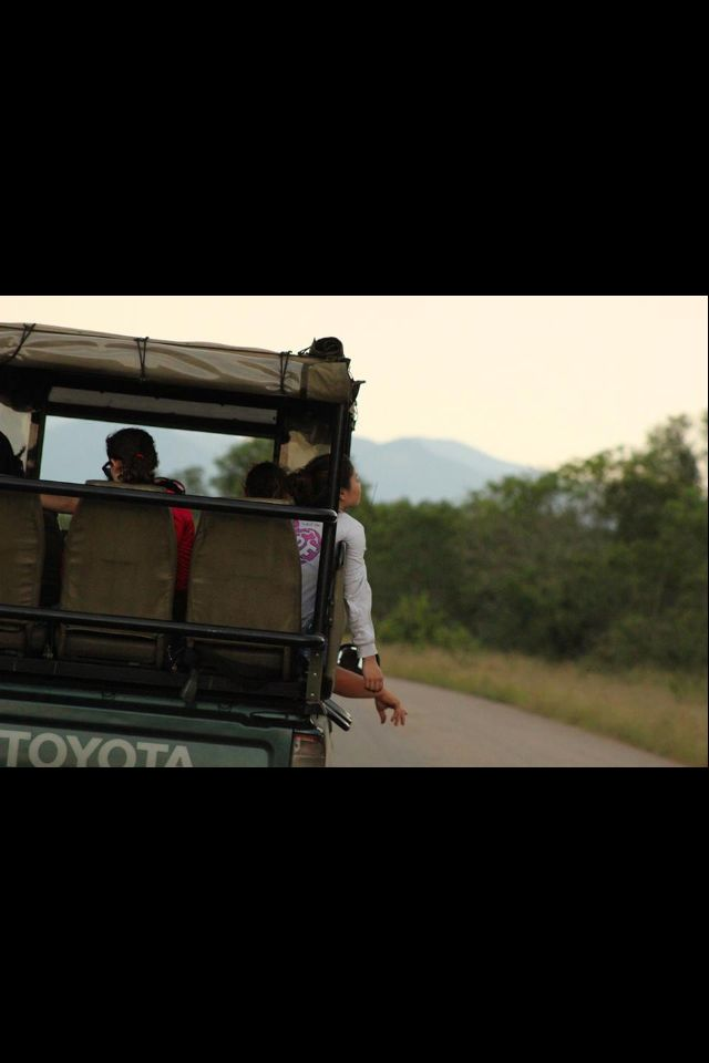Go on another safari