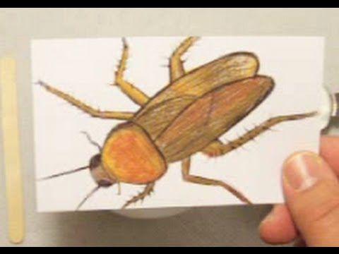 كيف تصنع مبيد صراصير بنفسك Animals Recepies Bee
