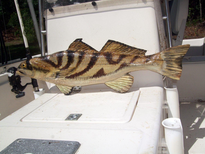 "northern kingfish 30"" chainsaw wooden fish carving nautical"