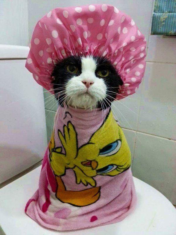 Kätzchen In Der Dusche