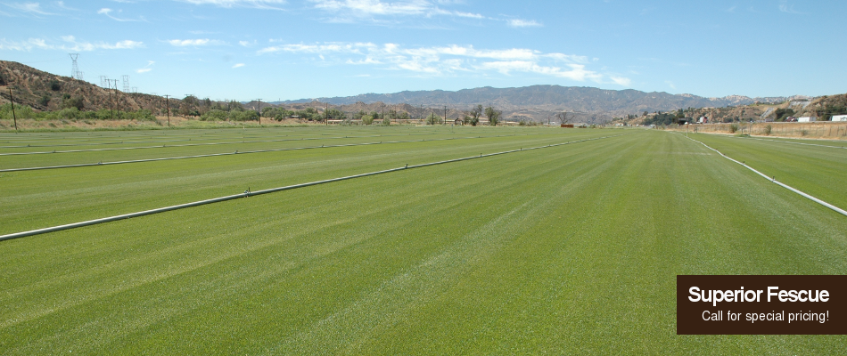 I Think This Is A Really Cool Picture Of A Sod Farm I Am Going To Be Needing A Lot Of This Stuff Soon We Moved Into A New House That