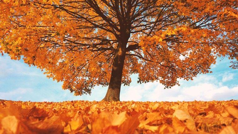 Желтые листья 5   Осенние картинки