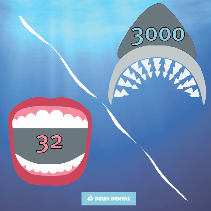 Sharks have nearly 1,000 times more teeth than humans