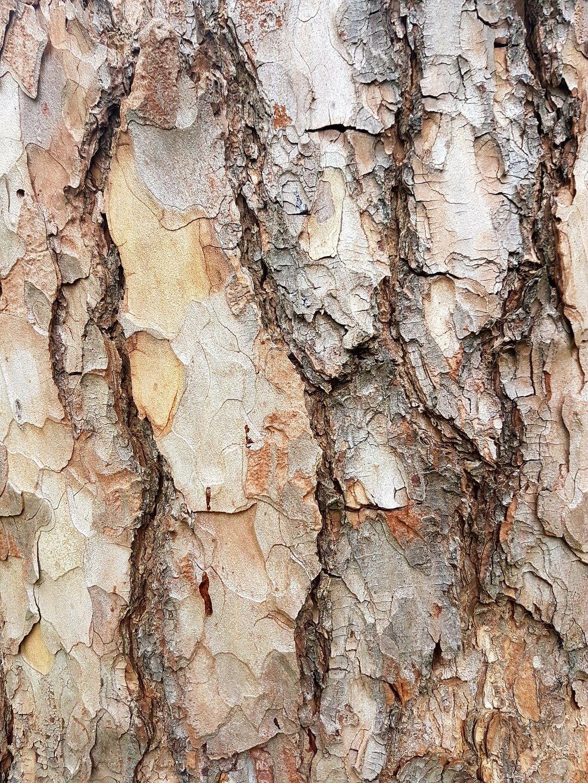 Tree Bark Close Up Tree Textures Earth Texture Texture Photography