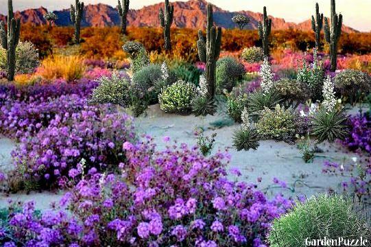 Flower Garden Designs Desert Flower Garden Gardenpuzzle