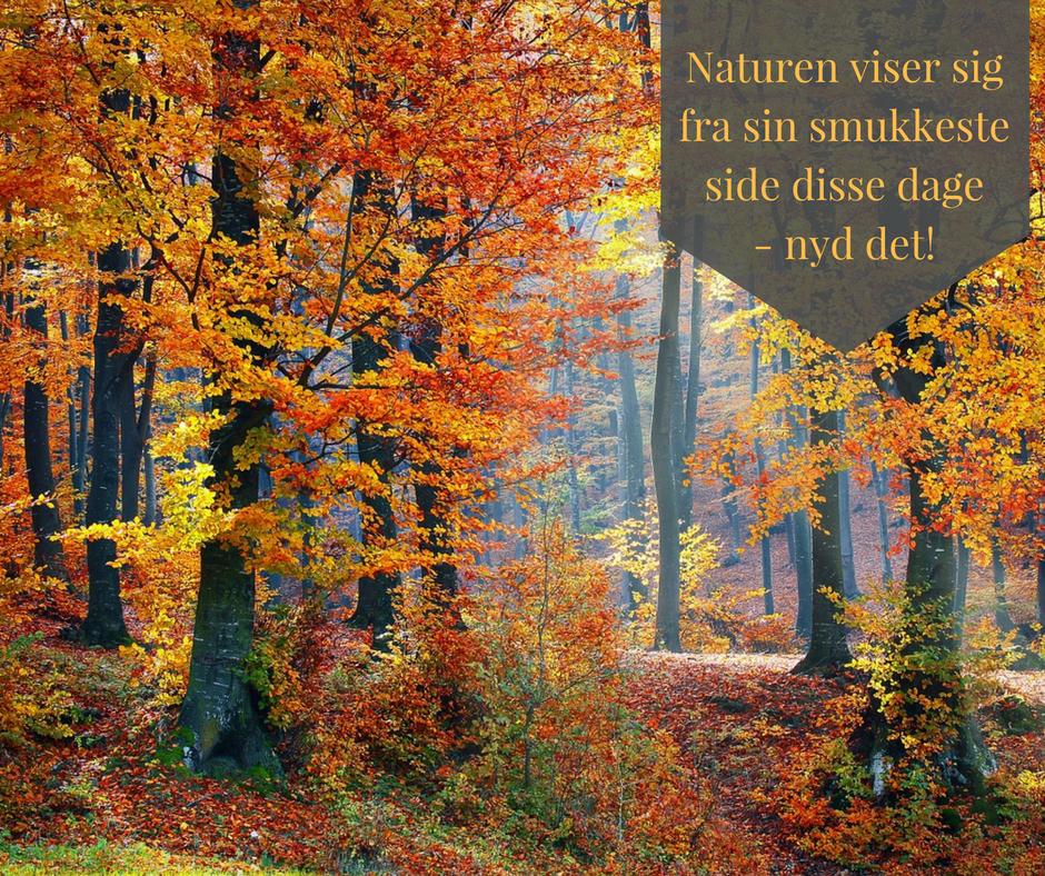 Efteråret er en smuk årstid hvor hele farvepaletten kommer i brug. Vi håber alle er kommet godt ind i november måned.