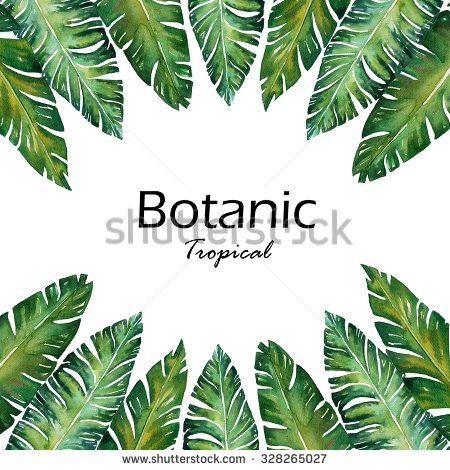 Banana Leaves Watercolor Frame Plant Botanic Painting Space For Your Text On White Background Banana Leaves Watercolor Leaves Sketch Framed Plants