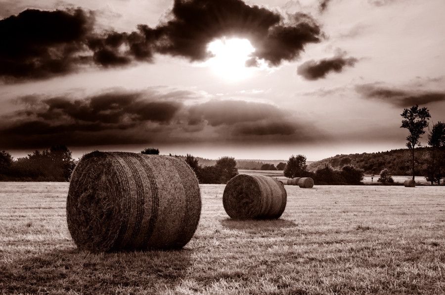 Nice moody pic. The multiple bales display depth beautifully.