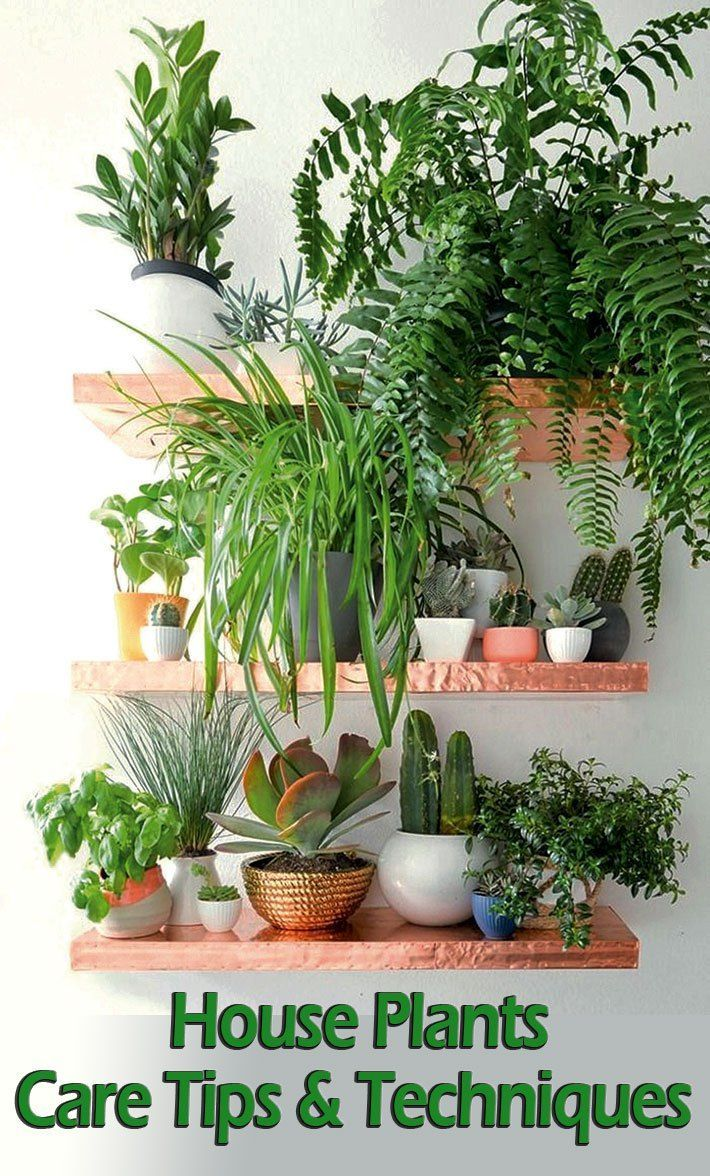 top 10 feng shui tips cre. House Plants - Care Tips \u0026 Techniques Use These Expert And To Keep Your Top 10 Feng Shui Cre H