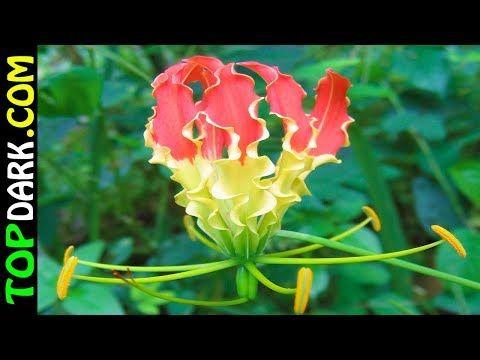 19 Flores Más Caras Y Hermosas Del Mundo Youtube 19 Flores Más