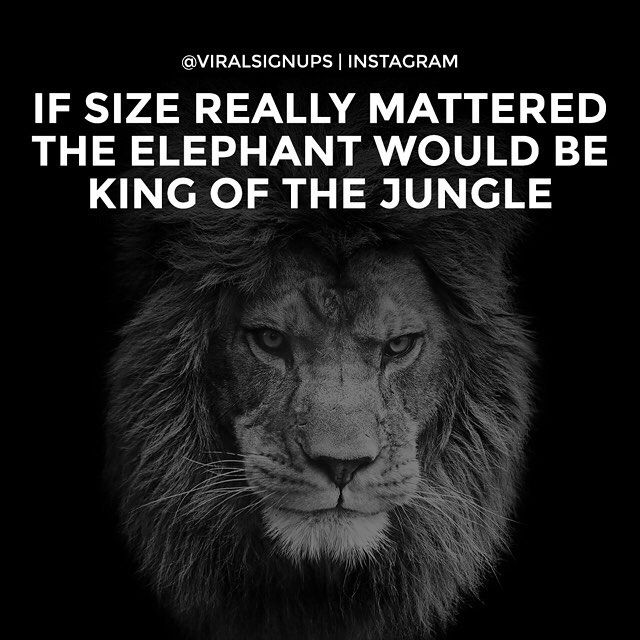 Life Size Quotes: If Size Really Mattered Then The Elephant Would Be King Of