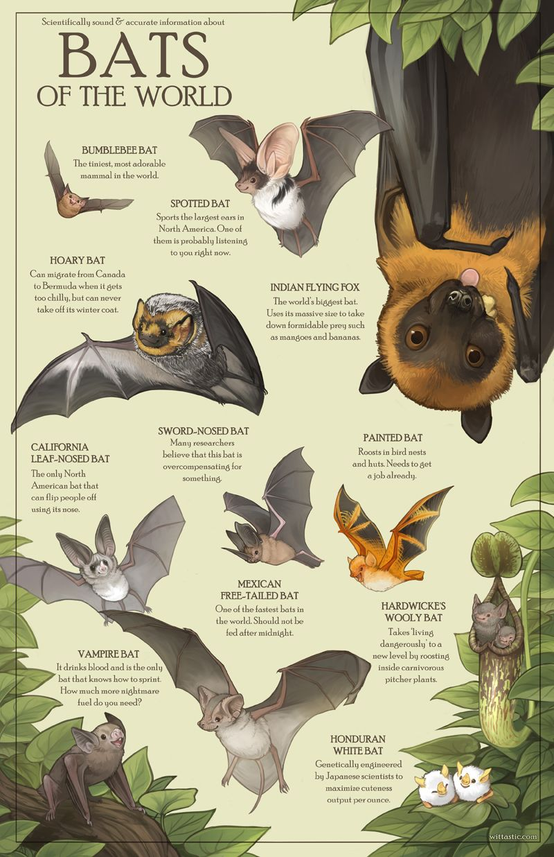 Half-Wit Dream: Heheh, finally finished! All of these bats are ... on