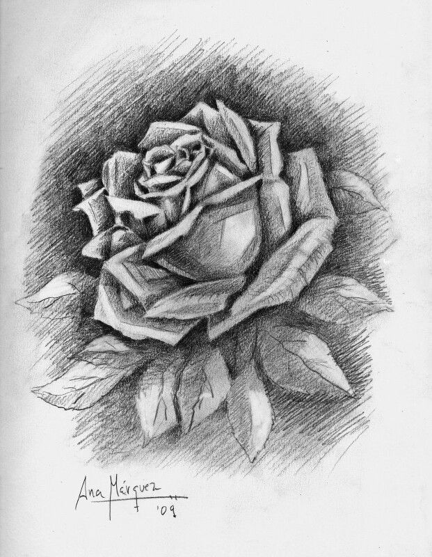 Rosa 1 Flower Designs Wonderful Images Sketches