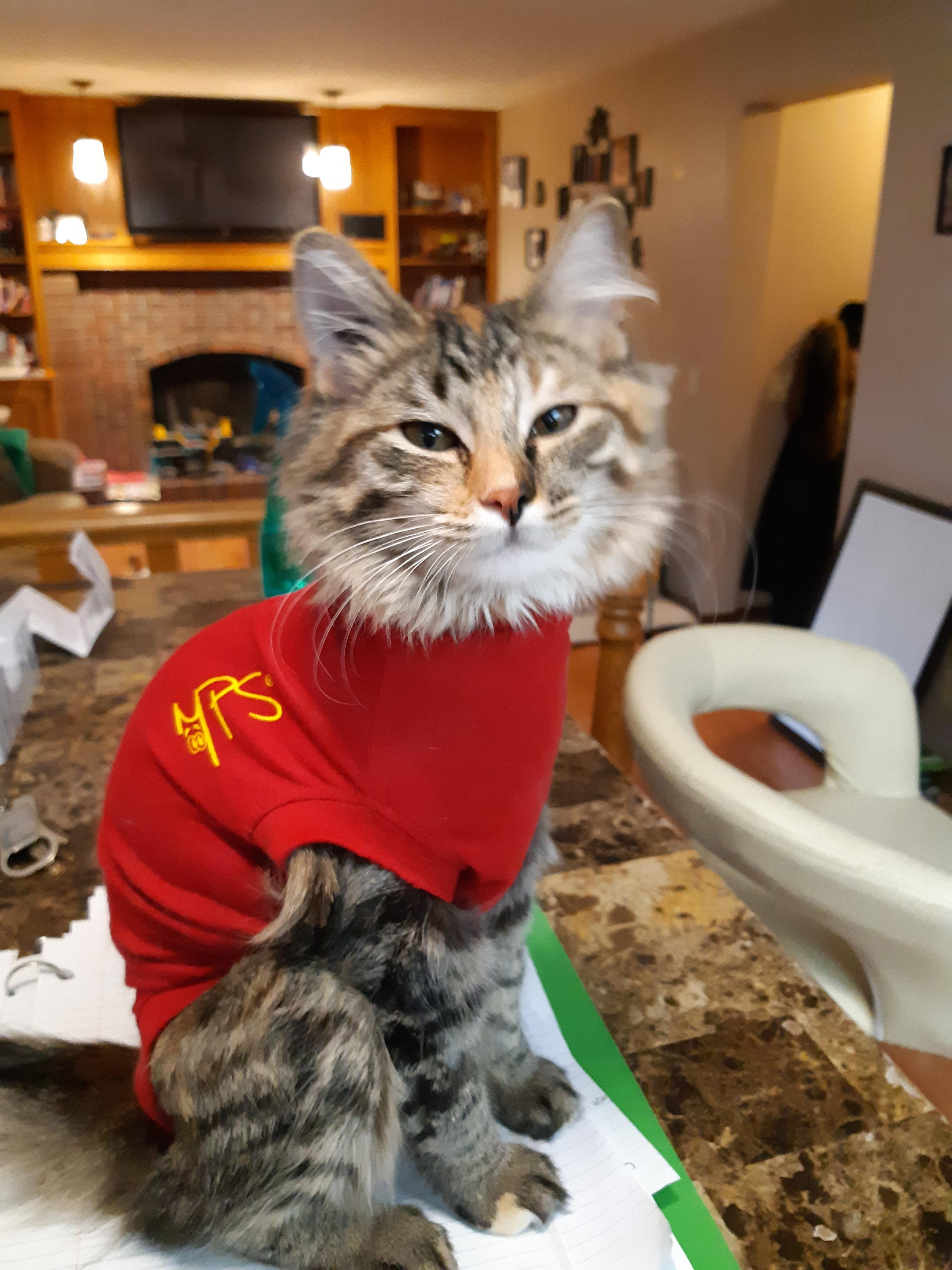 Took My Kitten In To Get Her Fixed And Instead Of A Cone They Gave Her A Little Onesie To Wear Kitten Cats And Kittens Funny Cat Pictures