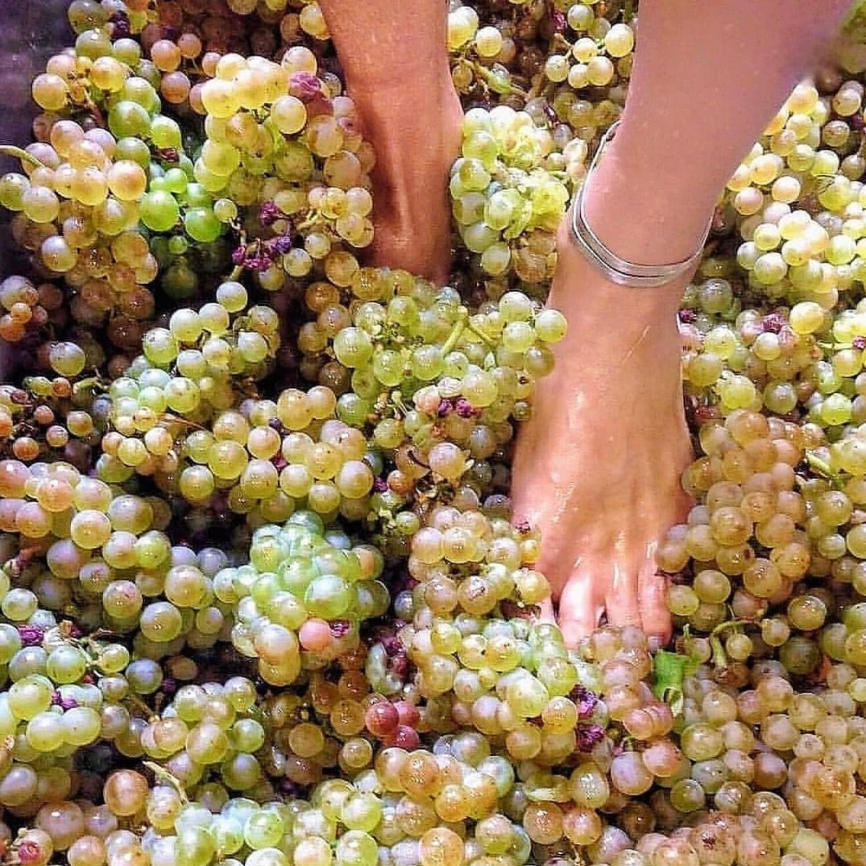 Its always my dream to try stepping on those grapes its