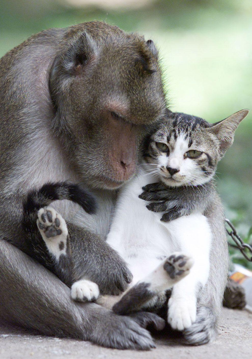 Животные как люди | Смешные фотографии животных ...