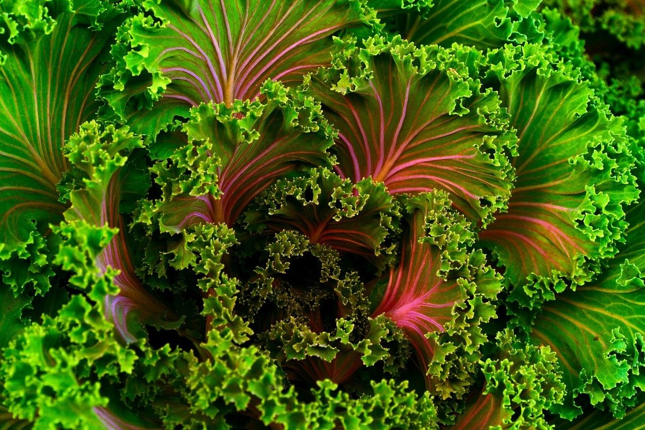 Herbalife tip Cook your own kale chips. Mist the leaves