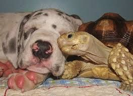 Image result for animal friends