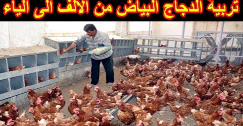 تربية الدجاج البياض في المنزل Beef Food Meat