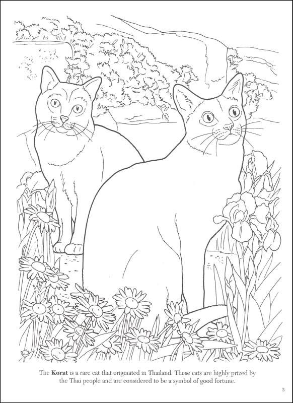 Cat Lovers Coloring Book | Additional Photo (Inside Page) | Coloring ...