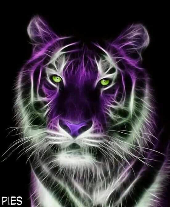 Beautiful Animals Beautiful Blue Tigers Animals